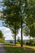 Spaziergänge durch den Staff Landschaftspark